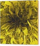Dandelion Wood Print by Ryan Kelly