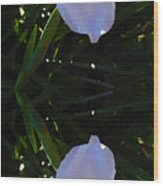 Day Lily Reflection Wood Print by Amy Vangsgard