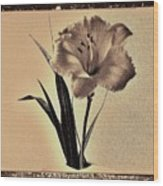 Daylily Of Old Wood Print by Marsha Heiken