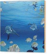 Delphinus Wood Print by Angel Ortiz