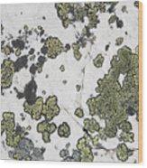 Detail Of Lichen On A White Rock Lake Wood Print by Michael Interisano