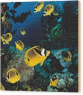 Diver And Butterflyfish Wood Print by Dave Fleetham - Printscapes