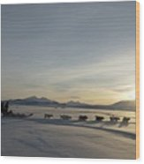 Dogsledge, Northern Greenland Wood Print by Louise Murray
