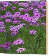 Dreaming Of Purple Daisies  Wood Print by Carol Groenen