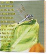 Ecclesiasticus Sixteen Twenty Nine Wood Print by Ravenna Taylor