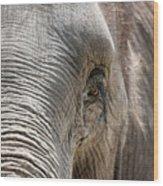 Elephant Eye Wood Print by Jeannie Burleson