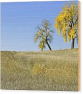Fall Days In Fort Collins Co Wood Print by James Steele