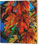 Fall Reds Wood Print by Robert Bales
