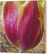 Fancy Tulip Wood Print by Garry Gay