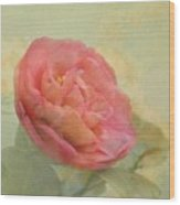 February Camellia Wood Print by Cindy Garber Iverson
