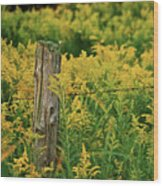 Fence Post7139 Wood Print by Michael Peychich