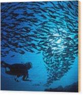 Fiji, Galapagos Islands Wood Print by Dave Fleetham - Printscapes
