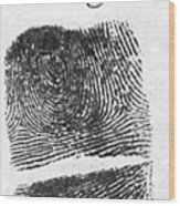 Fingerprints Of Vincenzo Peruggia, Mona Wood Print by Photo Researchers