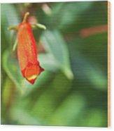 Firecracker Blossom Wood Print by Douglas Barnett