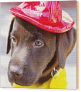 Firefighter Pup Wood Print by Toni Hopper