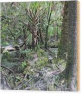Florida Landscape - Lithia Springs Wood Print by Carol Groenen