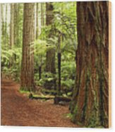 Forest Wood Print by Les Cunliffe