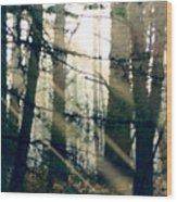 Forest Sunrise Wood Print by Paul Sachtleben