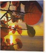 Glowing Red II Wood Print by Stephen Anderson