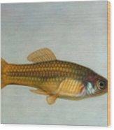 Go Fish Wood Print by James W Johnson
