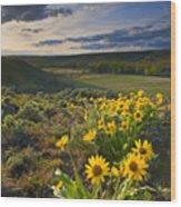 Golden Hills Wood Print by Mike  Dawson