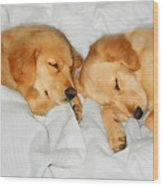 Golden Retriever Dog Puppies Sleeping Wood Print by Jennie Marie Schell