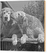 Golden Retrievers The Kiss Black And White Wood Print by Jennie Marie Schell