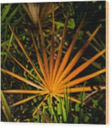 Golden Saw Palmetto Wood Print by John Myers