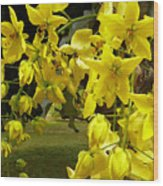 Golden Shower Tree Wood Print by James Temple