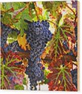 Grapes On Vine In Vineyards Wood Print by Garry Gay