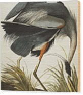 Great Blue Heron Wood Print by John James Audubon