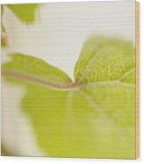 Green Grapevine Leaf Wood Print by Sami Sarkis