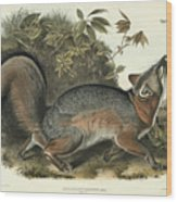 Grey Fox Wood Print by John James Audubon