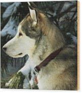 Handsome Husky Nanuk Wood Print by Marjorie Imbeau