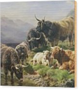 Highland Cattle Wood Print by William Watson