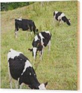 Holstein Cattle Wood Print by Gaspar Avila