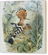 Hoopoe Wood Print by Edouard Travies