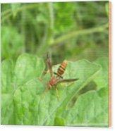 Hornet On Watermelon Wood Print by Angi Nagel