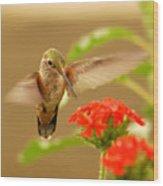 Hummingbird Wood Print by Don Wolf
