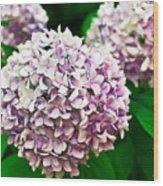Hydrangea Purple Wood Print by Ryan Kelly