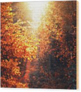 Illuminated Forest Wood Print by Wim Lanclus