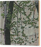 Impression Of Wall And Trees Wood Print by Lenore Senior