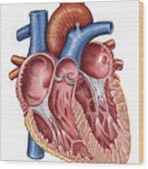 Interior Of Human Heart Wood Print by Stocktrek Images