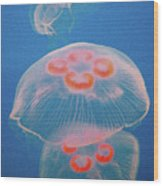 Jellyfish On Blue Wood Print by Sally Crossthwaite