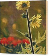 July Afternoon-compass Plant Wood Print by Bruce Morrison