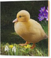 Just Ducky Wood Print by Bob Nolin