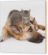 Kitten Laying On German Shepherd Wood Print by Susan Schmitz