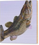 Largemouth Bass Side Profile Wood Print by Corey Ford