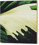 Leaf Abstract 7 Wood Print by Sarah Loft