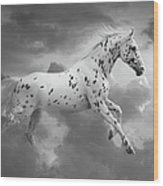 Leopard Appaloosa Cloud Runner Wood Print by Renee Forth-Fukumoto